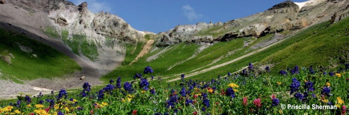 pano-PS-mountains-wildflowers